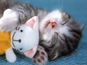 Cute-Kitten-Asleep-01